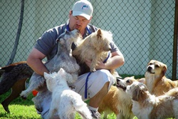 pampered pooch pet care in fort lauderdale florida doggy daycare in ft laud